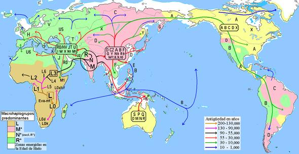 Migraciones humanas en todo el mundo según los datos del ADN mitocondrial, que al heredarse por vía materna, permite analizar las líneas matrilineares del ser humano hasta sus orígenes.