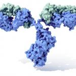 Inmunoglobulina-wikipedia