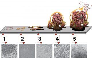 Bacterias: cuando la unión hace la fuerza