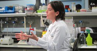 Generando riñones en el laboratorio