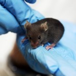 Lab_mouse_mg_3213